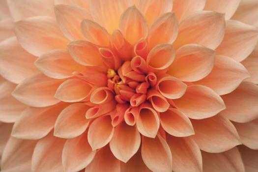 Bloom 2014