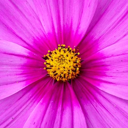 2012 08 06_Iphone photos_4113