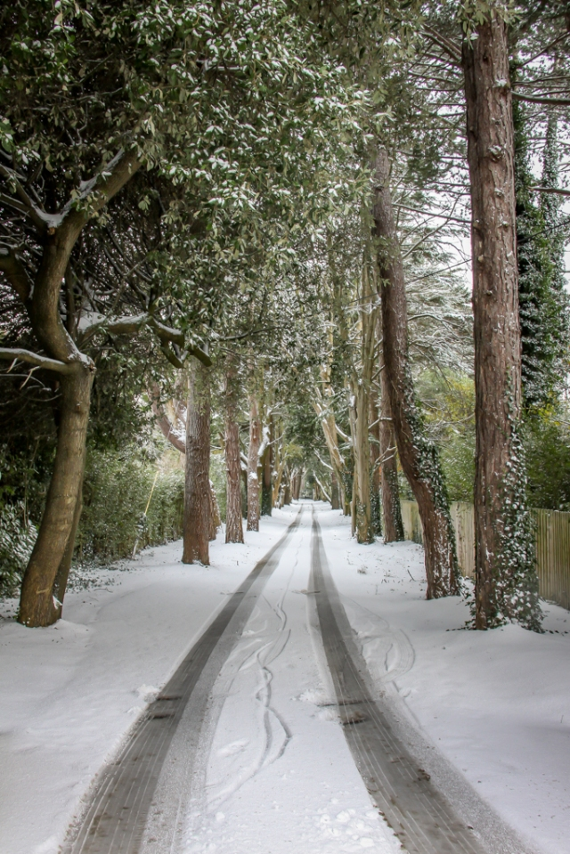 Snow December 2010 005