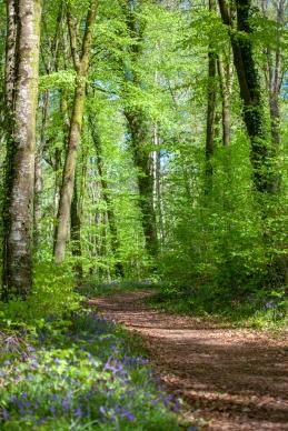 Manor Abbey Wood Bluebells-4259