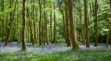 Manor Abbey Wood Bluebells-4272